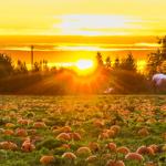 mrn-banner-pumpkin-01